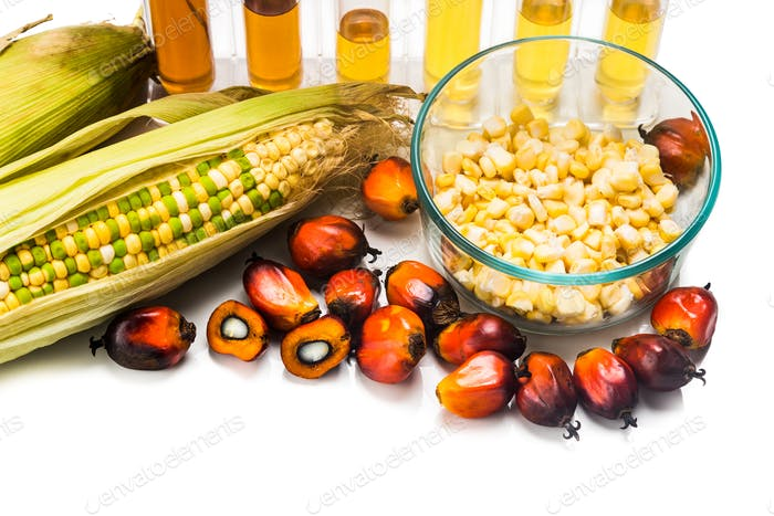 Corn and Oil Palm generated ethanol in test tubes, with BIOFUEL