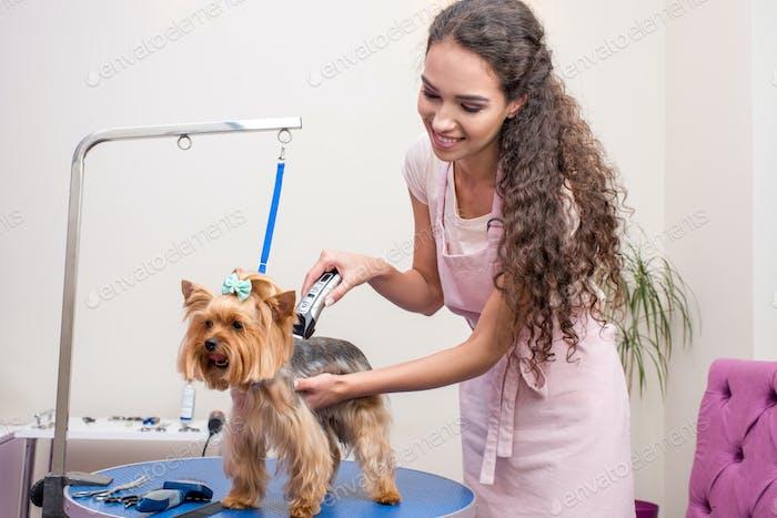 lächelnd junge Groomer in der Schürze trimmen niedlichen pelzigen Hund in pet salon