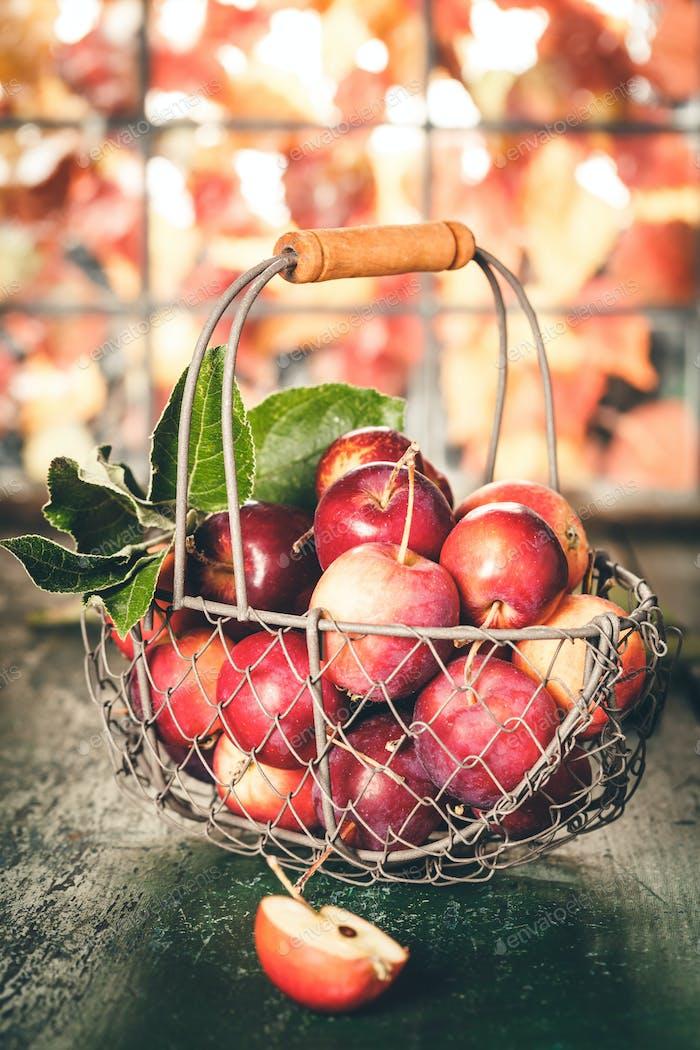 Äpfel im Korb, Herbst und Halloween Konzept