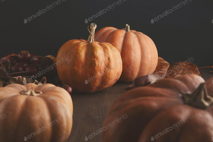 Beautiful pumpkins with leaves and chestnuts on black background