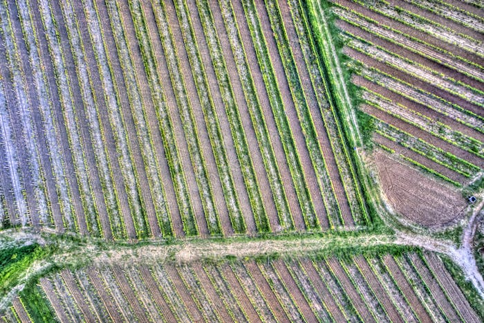 Vineyard seen from above