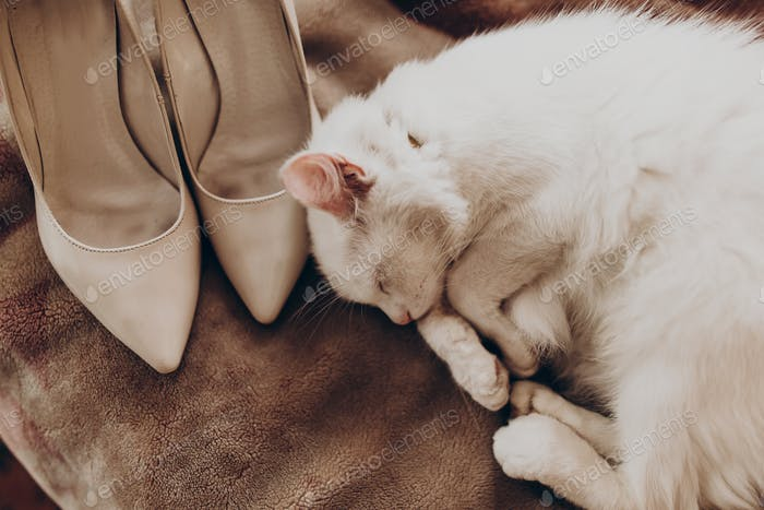 Cute white cat with funny emotion and beige stylish shoes