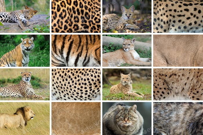 Collection of eight animals and their true skin textures