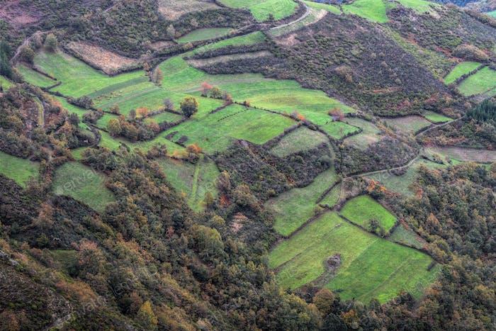 Pasture Fields alternate with Wild Vegetation
