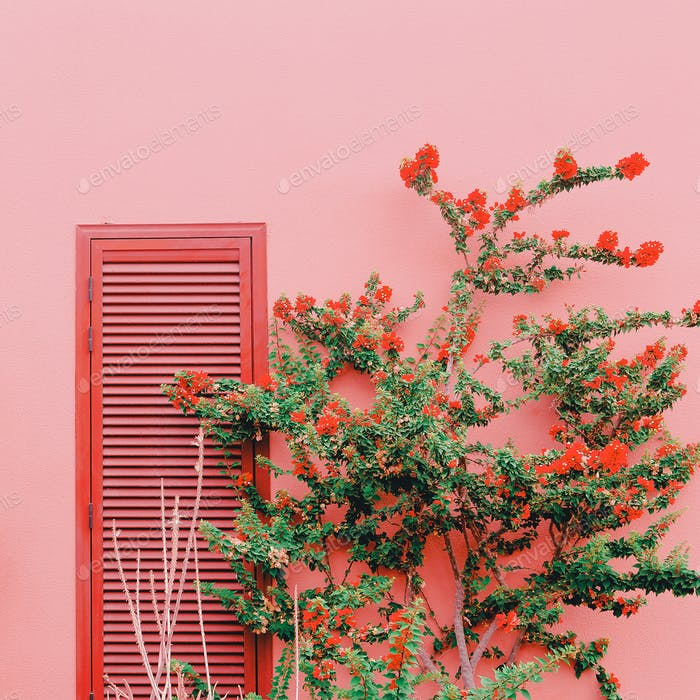 Plants on pink concept. Tropical Flower on pink wall background.