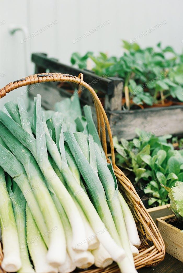 Eine Anzeige von frischem Gemüse.