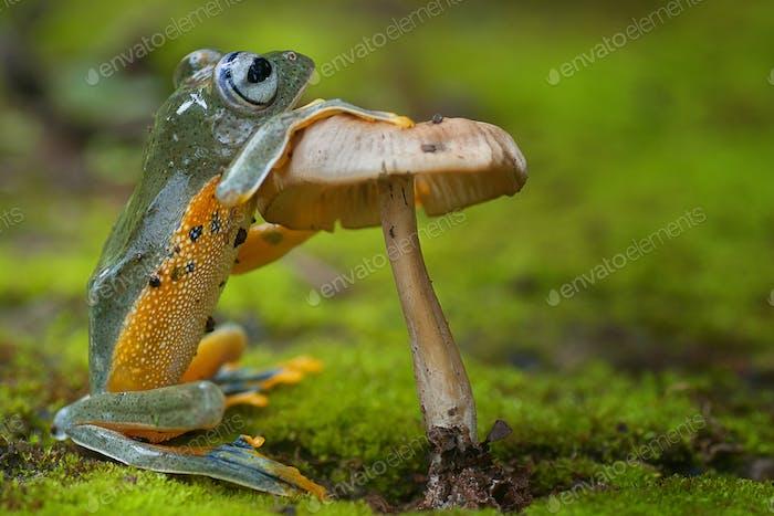 Tree Frogs Sitting Next to a Mushroom