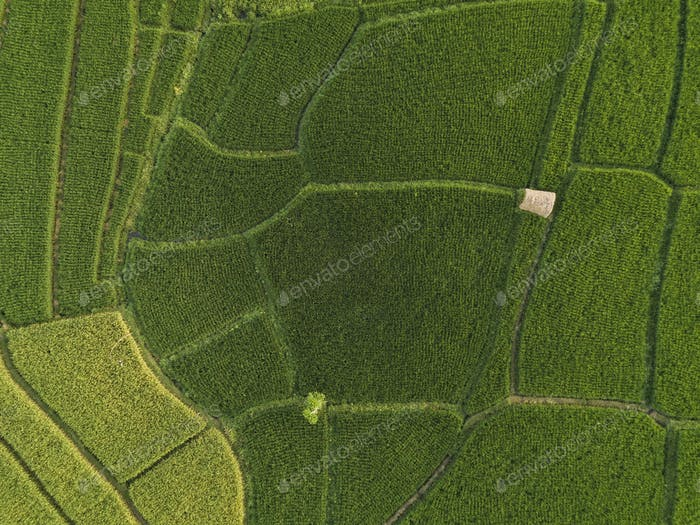 Aerial view of rice fields,Bali,Indonesia