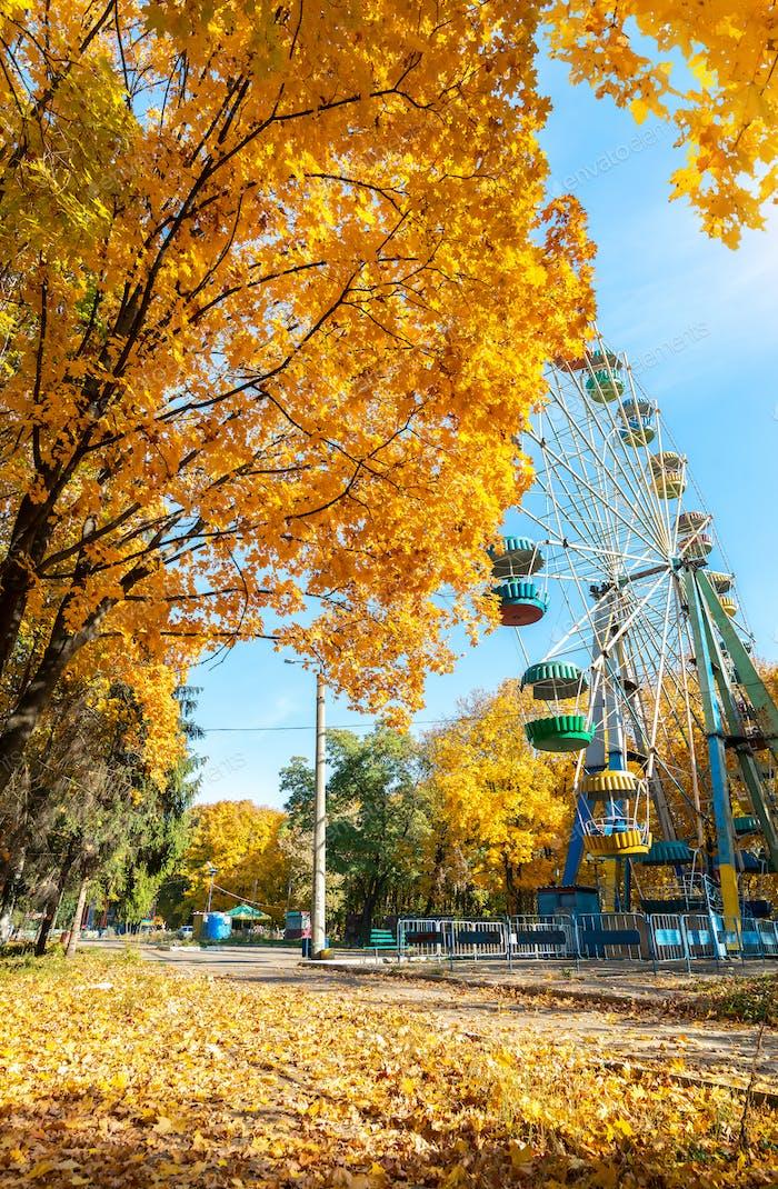 Ahornholz im Herbstpark
