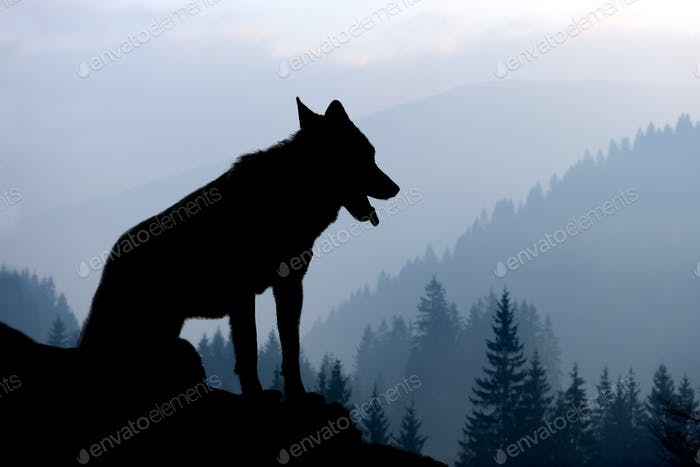 Wolf silhouette on mountains background