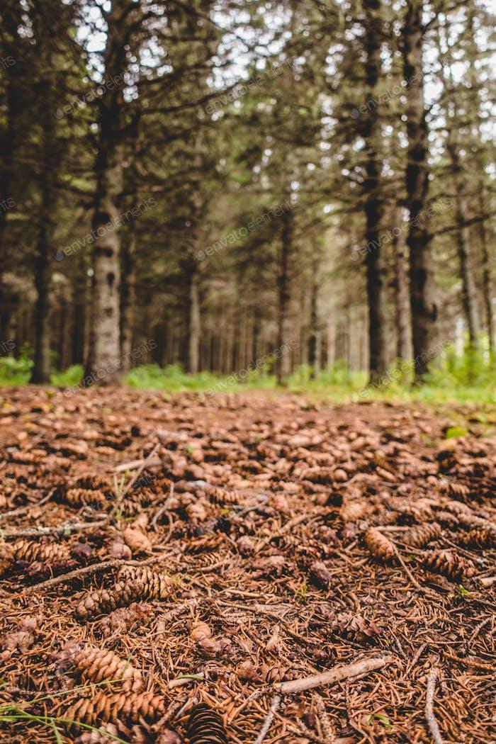 Vista al suelo sin agua durante la ola de calor en el Bosque