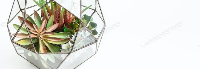 Mini garden in glass florarium, copy space