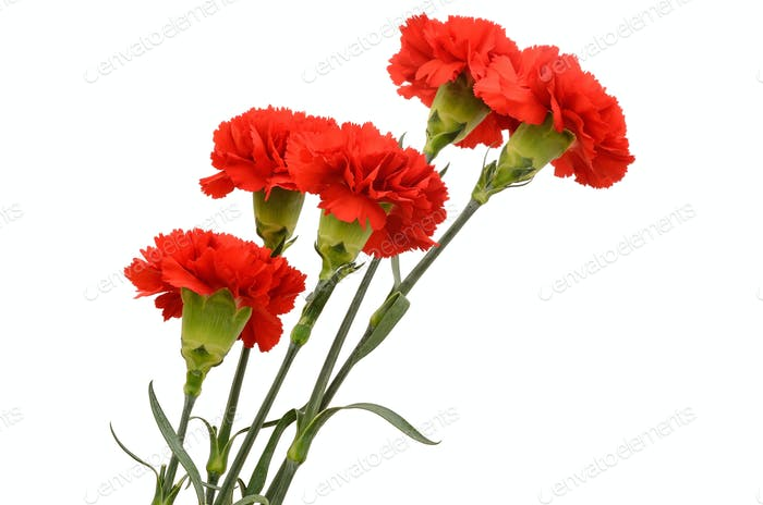 Bouquet of five red carnations