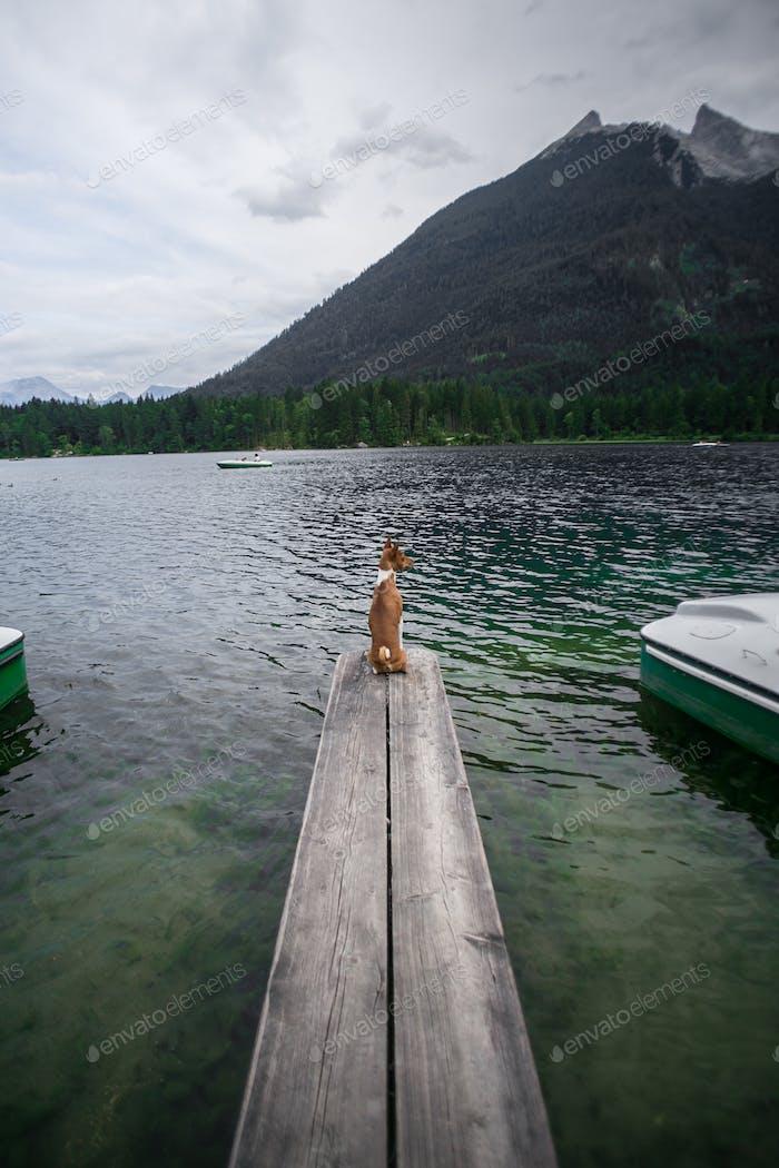 Mascota junto al agua. Mascota en la naturaleza