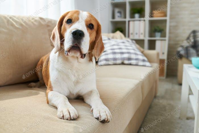 Cute dog lying on sofa