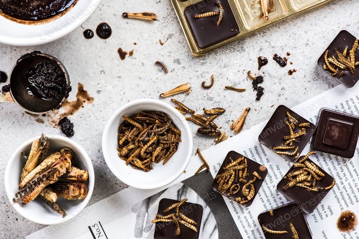 Homemade edible insects with chocolate