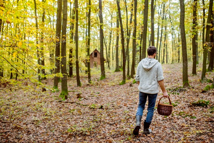 Young man with basket picking musroom in autumn forest
