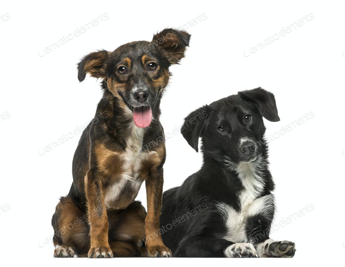 Two Crossbreeds