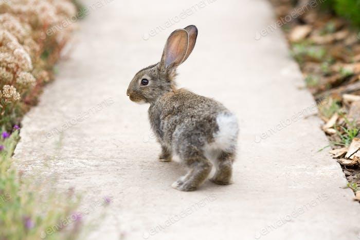 Kaninchen ist ein schönes Tier der Natur