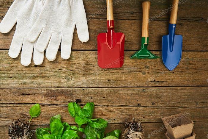 Flaches Layout von Gartenwerkzeugen, Basilikum, Grüns eco Blumentopf, Erde auf hölzernem Hintergrund.
