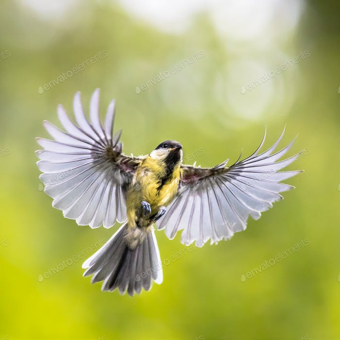 Bird in flight on green garden background instagram format