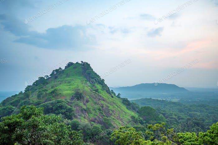 Scenic view of Srilankan mountain forest