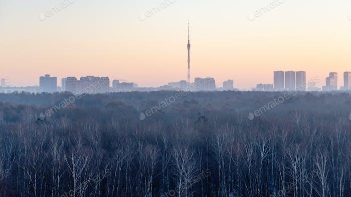 oben Blick auf kahle Bäume in der Stadt bei rosa Morgendämmerung