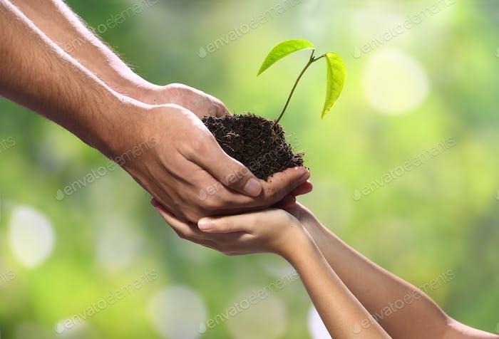 Manos sosteniendo la planta juntas