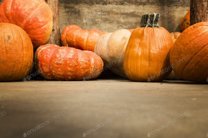 Pumpkins selection