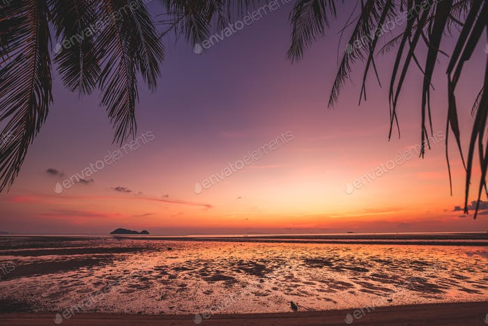 Beautiful sunset Silhouette coconut palm tree