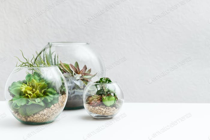Glass florarium vases with succulent plants, copy space
