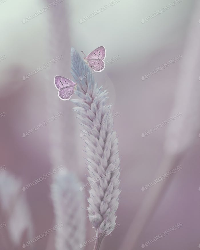 Pink Butterflies Sitting on a Flower