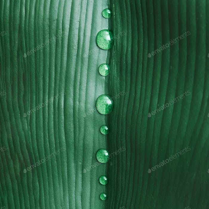Close up of green tropical leaf with rain drops. Macro flat lay. Nature summer concept.
