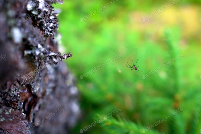 Spider on a web in the forest closeup
