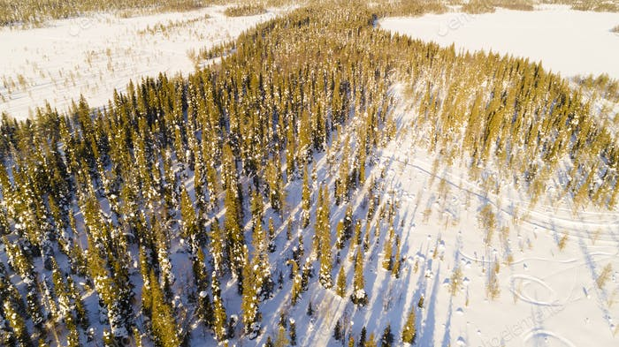 Aerial/Drone View of Snow Covered Tree Forest