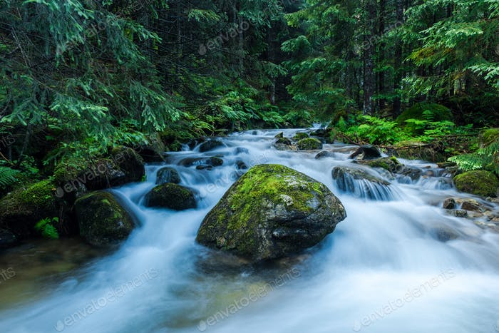 Wild River Flows in Ancient Forest, Chocholowska Valley,Poland