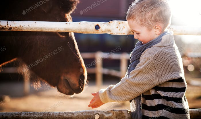 Child feeding pony in mini zoo