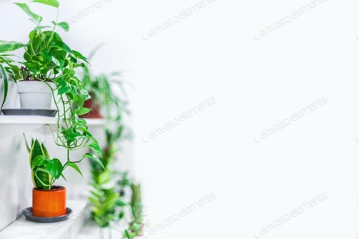 Grünpflanzen Heimtextilien auf weißem Hintergrund