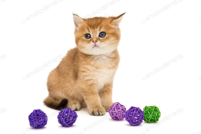 Little orange kitten and colorful balls
