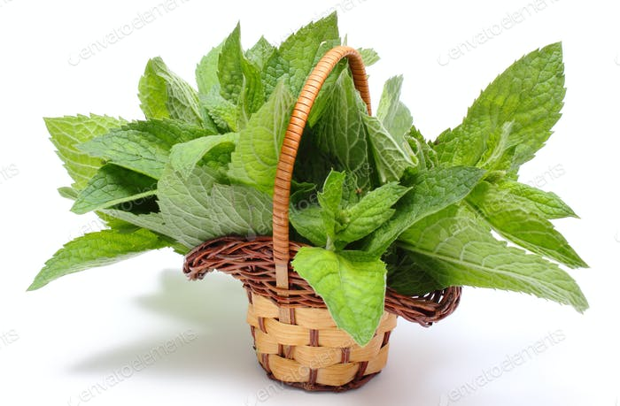 Bunch of fresh green mint in wicker basket on white background