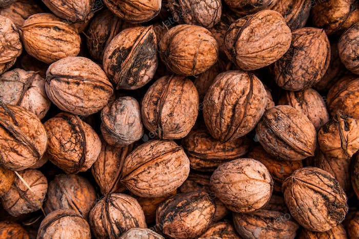 Background of walnuts. Many nuts