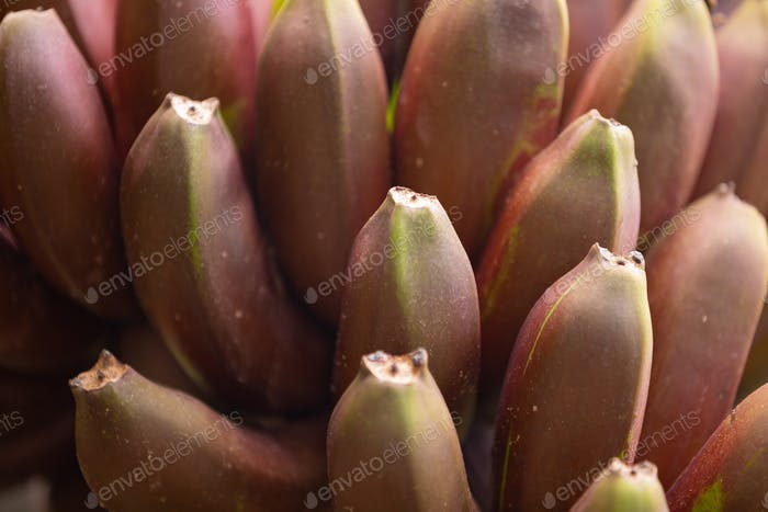 Full Frame Of Fresh Organic Red Banana's Bunch