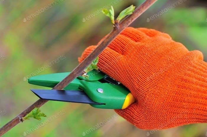 Hände in Handschuhe Gärtner tun Wartungsarbeiten, Schneiden