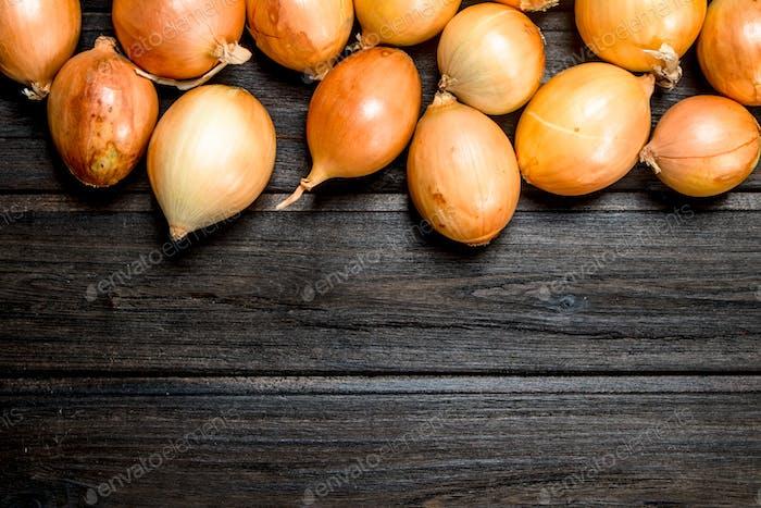 Ripe fresh onions.