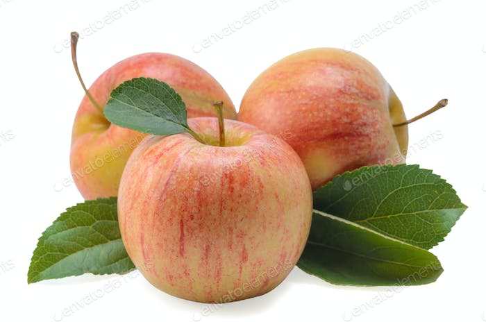 fruits of apples