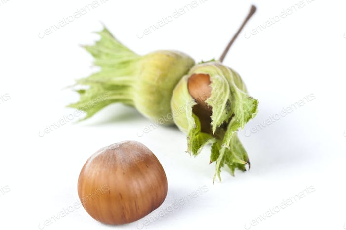 One Hazelnut