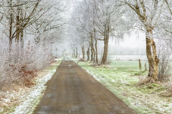 Frosty frisian winter road