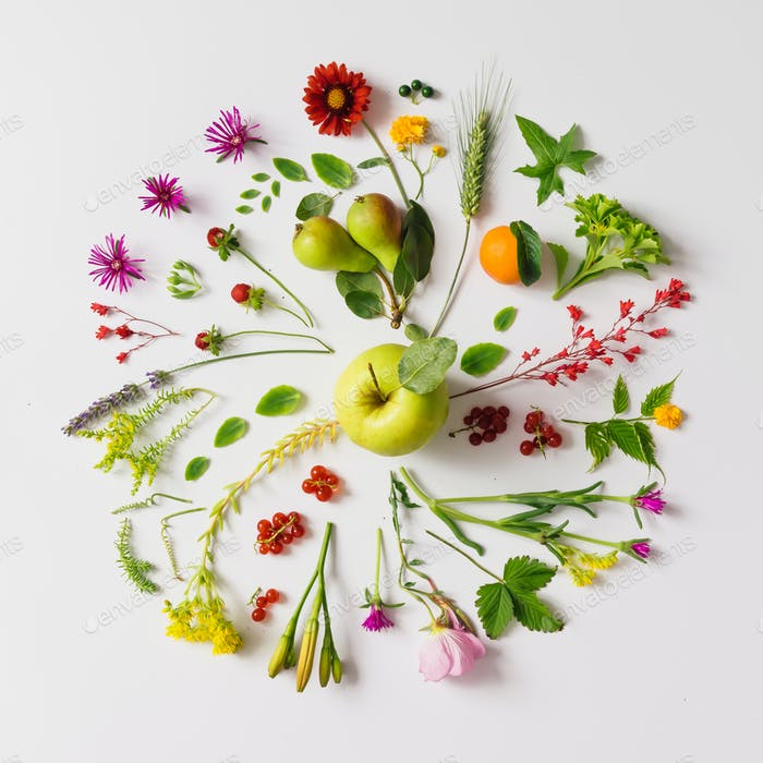 Various natural things neatly arranged in circle