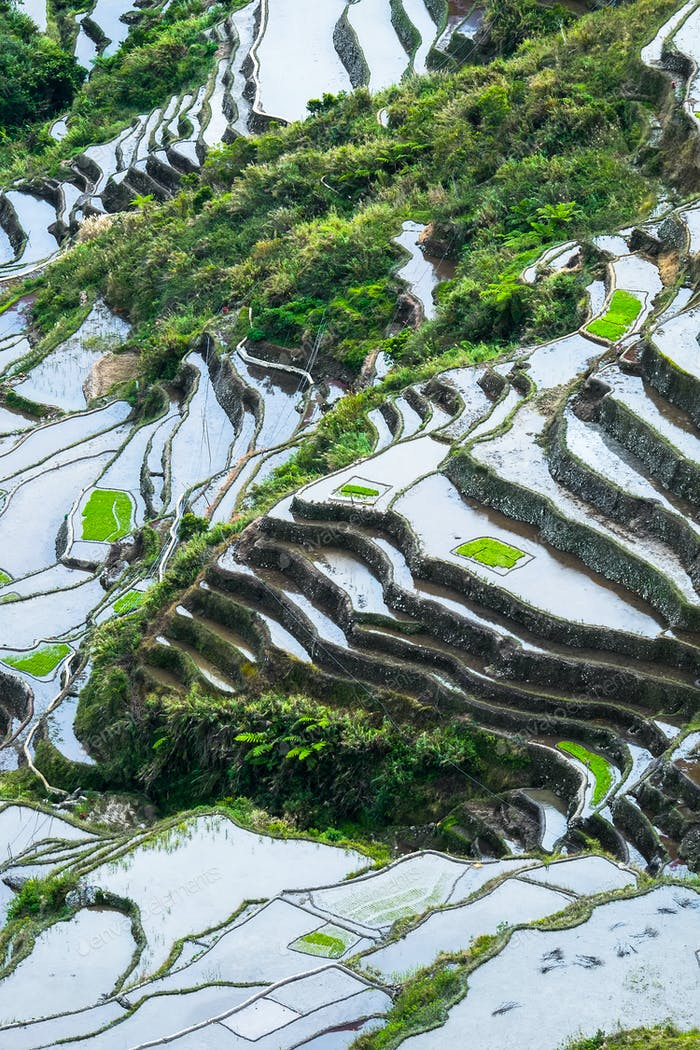 Abstract rice terraces texture with sky reflection. Banaue, Phil