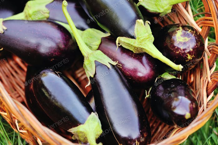 Fresh eggplant in basket on grass